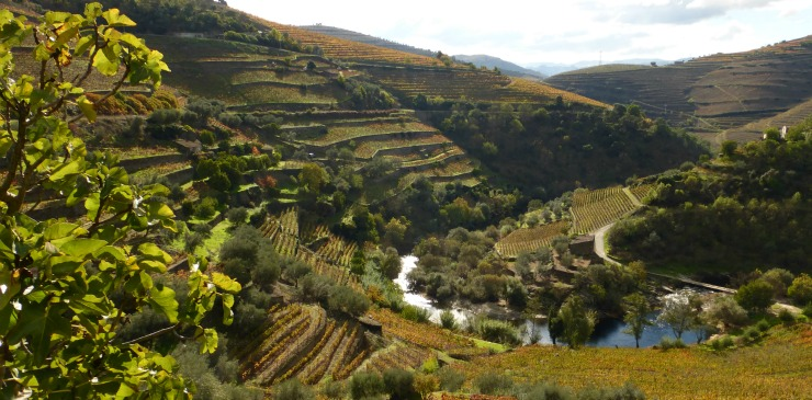 Portugal Douro River Valley Corgo River Cruise and Walking Tour